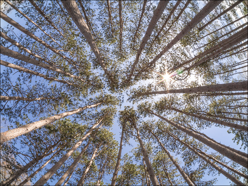 You can't beat using the fisheye in a tight grove of trees.