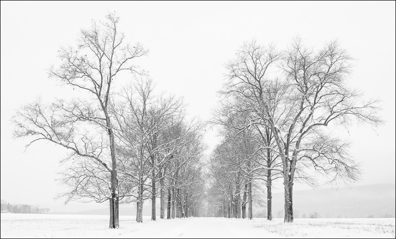 Pin Oak Allee Under Snow | New Paltz, NY