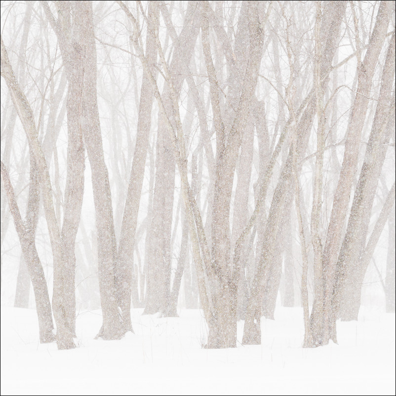 Whiteout! | New Paltz, NY